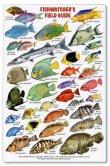 Reef Fish Identification Card