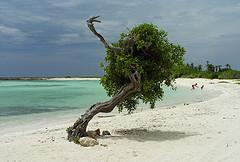 Aruba resorts - baby beach