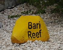 bonaire diving - bari reef dive site