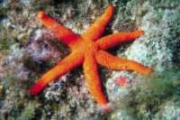 starfish suriname's map