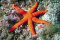 caye caulker map - starfish