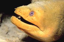 cayman brac diving - eel