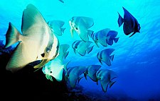 cayman brac scuba diving - fish