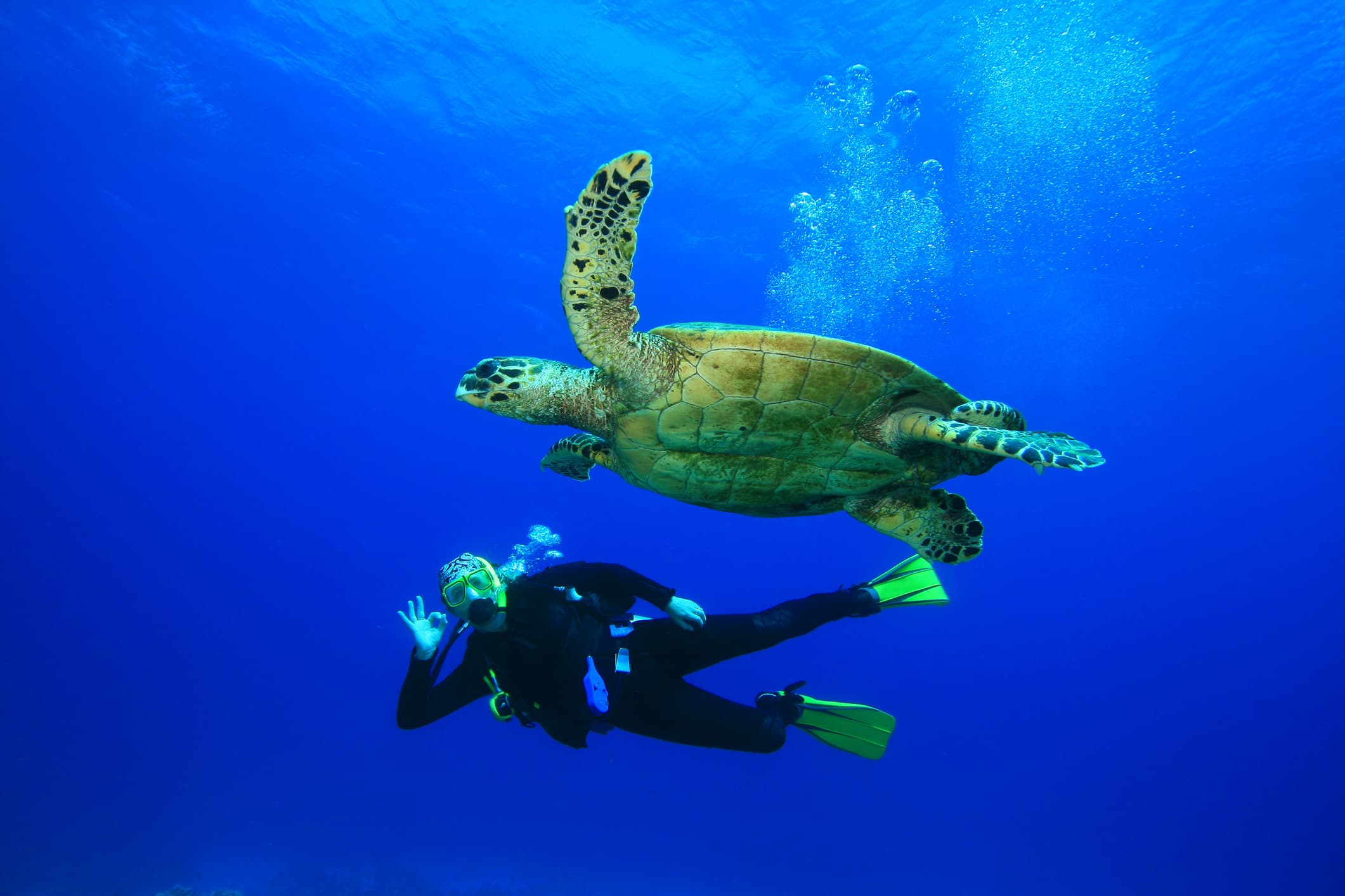 Guide to Cayman Islands scuba diving. Scuba diver with turtle.