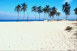 diving employment scuba - palm tree beach