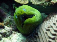 diving in bonaire - eel