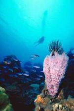 drift diving cozumel