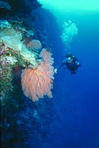 drift diving cozumel - diver on wall