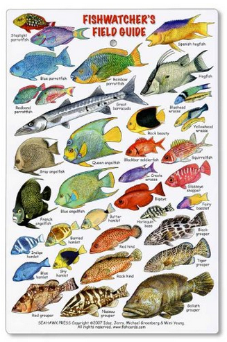 Reef Fish Identification Card