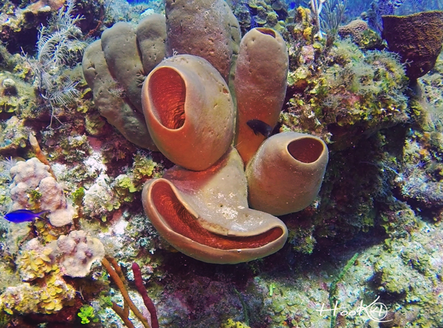 Little Cayman Island scuba diving trip review - coral.