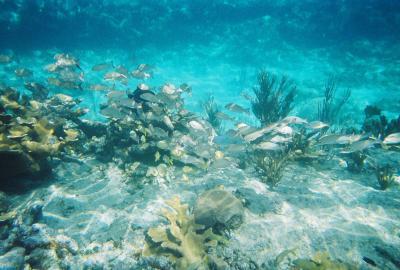 My Top Dive Grand Bahama Reef Bahamas