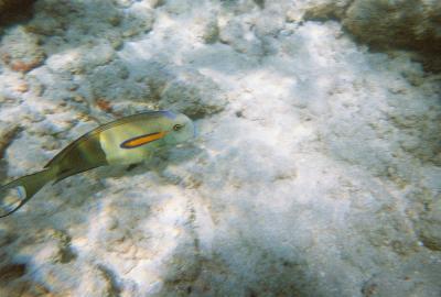 Hanauma Bay Feb. 2007