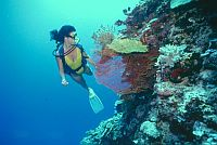 picture of scuba diving