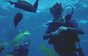 scuba diver with fish