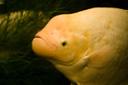scuba diving belize placencia - eel