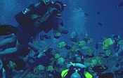 Picture of scuba divers with lots of little fish
