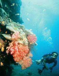 scuba diving facts-scuba diver