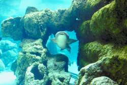 scuba diving with shark