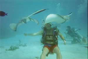 Feeding the stingrays at Stingray City, Grand Cayman.