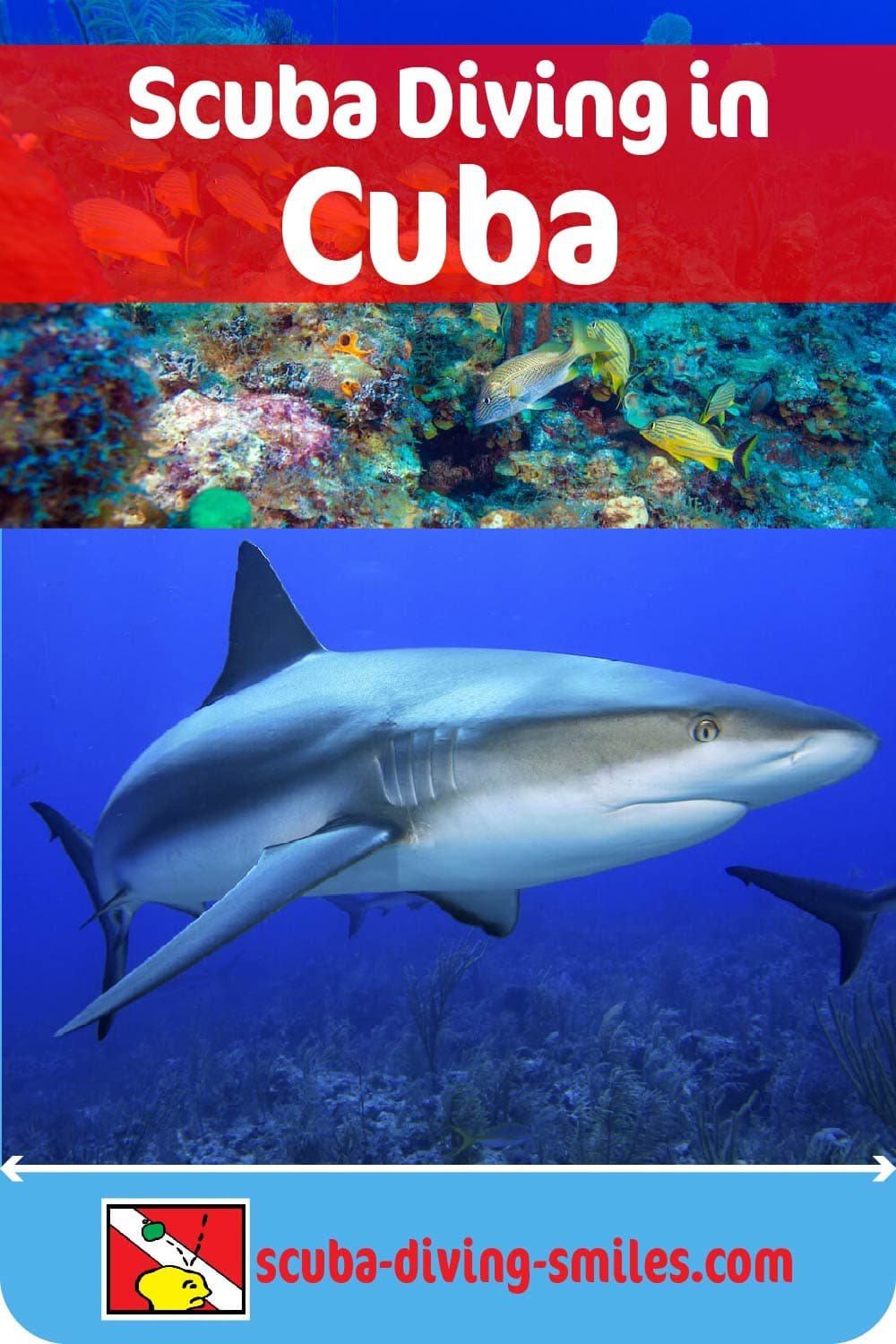 scuba diving in cuba with sharks