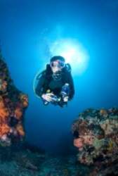 Diver in wetsuit checking out coral