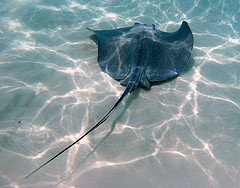 Stingray City dive site in Grand Cayman